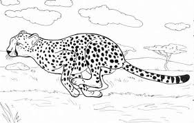 A cheetah can accelerate from 0 to 113 km in just a few seconds. Cheetah Run Catch His Prey Coloring Page Zoo Animal Coloring Pages Animal Coloring Pages Puppy Coloring Pages
