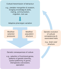 The Reach Of Geneculture Coevolution In Animals Nature Communications
