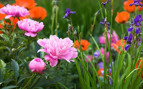 designing a fragrant flower garden