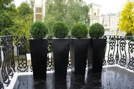 set of four circular topiary in tall black planters