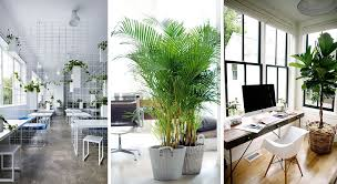 office greenery. Plants In The Office, A Healthy Addition Office Greenery W