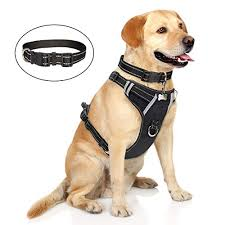 Top 10 Best Harnesses For Boxers Reviewed In 2019 Petstruggles