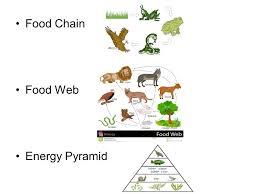 food web pyramid interpreting food webs ppt video online download