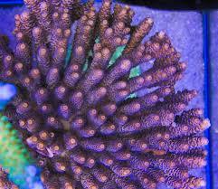 Oligotrofia acquario marino