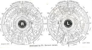 Dr Bernard Jensen Iridology Chart Fortune Telling By Iridology Looking At The Eyes