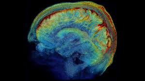 brain wiring diagram wiring diagram and schematic design can we build a plete wiring diagram of the human brain