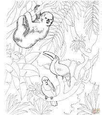 Small Picture Sloth and Two Toucans coloring page Free Printable Coloring Pages