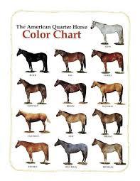 Miniature Horse Weight Chart American Quarter Horse Pets Home