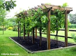 building grape arbor grape arbor plans and the steps on how to make it if  you . building grape arbor ...