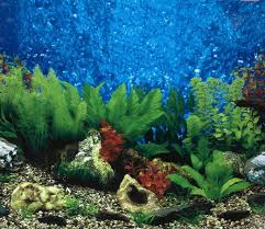 Fish Tank Backdrop 50 Best Aquarium Backgrounds To Download