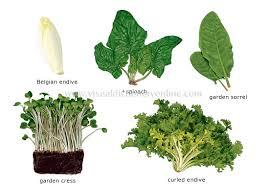 Food Kitchen Food Vegetables Leaf Vegetables 6 Image