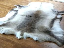 skin rug animal hide rugs cowhide sheepskin reindeer from animal hide rugs skin turgor non tenting skin rug
