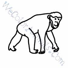 Small Picture Chimpanzee Coloring Pages