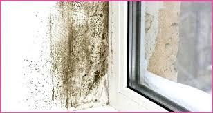 remove mold from bathroom ceiling