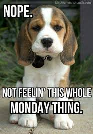 Monday Quotes Funny Delectable 48 Funny Monday Quotes To Make You Feel Awesome