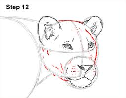 lioness face drawing. Wonderful Lioness Draw Female Lion 12 Intended Lioness Face Drawing