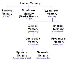 Long Term Memory Chart Types Of Memory Different Brain Memories Facts Jobs
