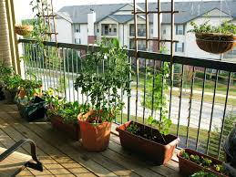 Apartment Porch Garden Inspiration Net Om Potted Vegetable Ideas Small  Screened