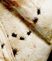 How to Kill Bed Bugs - Review of 5 the Most Effective Means