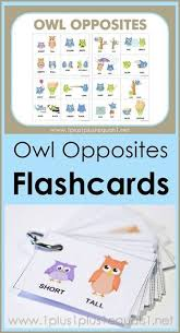 Flashcards Template Word Owl Opposites Flashcards Free Printable Homeschooling