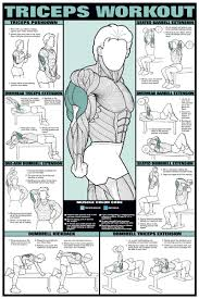 Chest Chart Gym 77 Bright Gym Workout Chart Hd Images Pdf