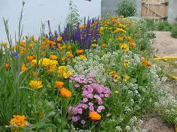 Small Picture Border Garden aralsacom