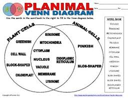 Comparing Plant And Animal Cells Venn Diagram Answers Plant Animal Cell Venn Diagram 4th Grade Science Projects