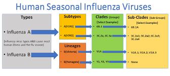 Types Of Influenza Viruses Cdc