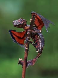 Resultado de imagen de dragon-naturaleza