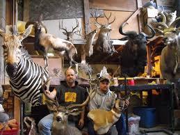 「動物標本製作」的圖片搜尋結果