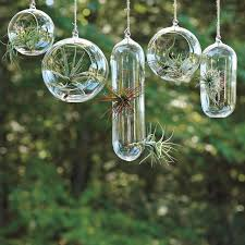 terrariums and other small space and urban gardening ideas