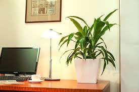 plants for office space. exellent office full image for office space with no natural light  plants throughout plants for office space o