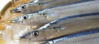 「2017年秋刀魚画像」の画像検索結果