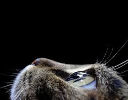 really cool macro shot of a cat