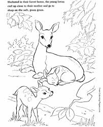 Animal Coloring Animal Coloring Pages