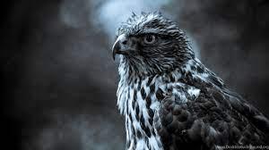 Black eagle wallpaper.jpg Desktop ...