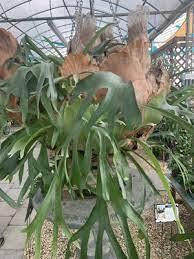 woodley s garden center 10015 two notch