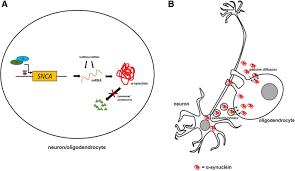 pathogenesis of multiple system atrophy