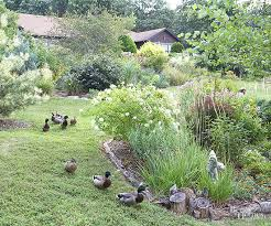how to keep groundhogs out of my garden. Landscaping How To Keep Groundhogs Out Of My Garden