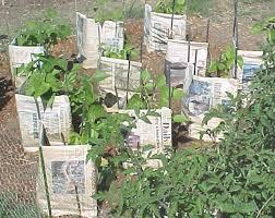 gardening in la blog