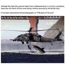 great white shark jumping at a helicopter during training. Brilliant Great Holy Crap And Great White Shark Jumping At A Helicopter During Training