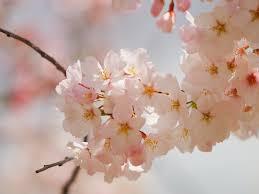 Flower Wallpaper Tumblr (#297408) - HD ...
