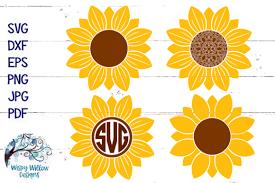 Caluya design | free svg. Sunflower Bundle Graphic By Wispywillowdesigns Creative Fabrica