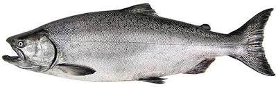 The Five Species Bc Salmon