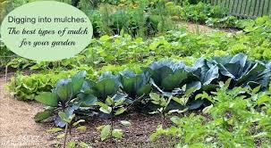garden mulcher. Garden Mulch Mulcher Shredder Hire