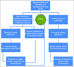 Muscle Location And Function Chart Flow Chart Depicting The Potential Role Muscle Co Ordination