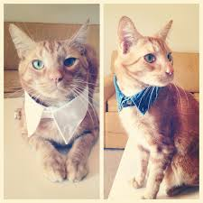 view in gallery fancy cat collar