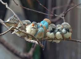 Risultati immagini per uccellini in riunione immagini