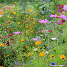 Wildflower Garden Design Fascinating Northeast Wildflower Seed Mix American Meadows