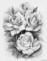 розы нарисованные простым карандашом Pencildrawingru красивые